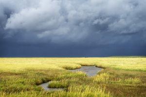 Salt Meadows